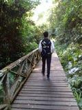Caverna di Niah del ponte fotografia stock