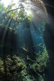 Caverna do cenote da entrada foto de stock