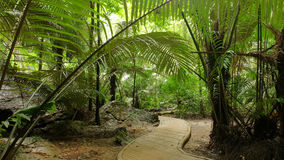 Caverna do curso Hup no parque nacional do patat, província de Uthaithani, Tailândia Foto de Stock Royalty Free