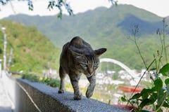 Caverna do macaco de Taiwan, local de reunião do gato, parede de pedra do gato, Fotografia de Stock Royalty Free