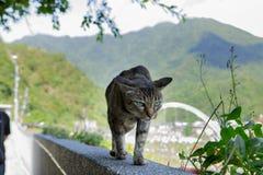 Caverna do macaco de Taiwan, local de reunião do gato, parede de pedra do gato, imagens de stock