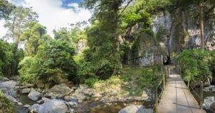 A caverna, o dossel e a floresta do diabo em Merida State imagem de stock royalty free