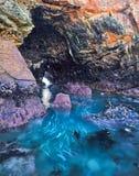 Caverna pintada Imagens de Stock