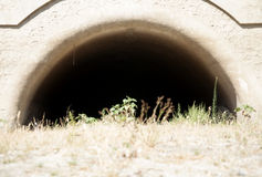 Caverna seca Fotografia de Stock Royalty Free