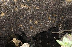 Caverne de 'bat' Images stock