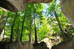Caverne de forêt Image libre de droits