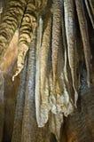 Caverne di Jenolan, Australia. Immagine Stock