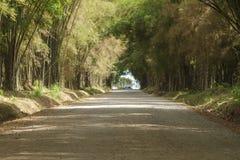 Caverne en bambou Photographie stock