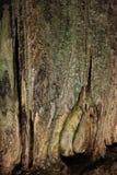 Cavernes de Sudwala Photo libre de droits