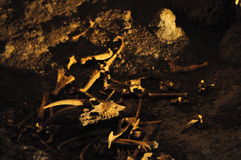 Cavernes de Waitomo Photos libres de droits