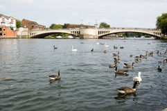 Caversham Bridge, Reading, Berkshire Royalty Free Stock Photography