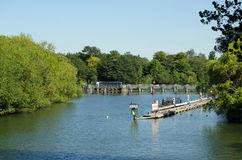 Caversham kędziorek na Rzecznym Thames przy czytaniem Obrazy Stock