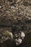 Caves at Natural Bridge Stock Image