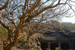 Caves & Tree Royalty Free Stock Photos