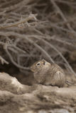 Cavi de désert, Patagonia, Argentine Photo stock