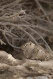 Cavi del deserto, Patagonia, Argentina Fotografia Stock