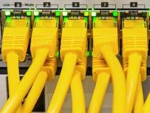 Cavi della rete Immagine Stock