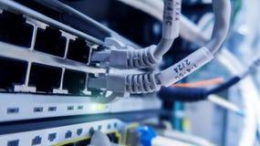 Cavi della rete connessi all'interruttore Hub della rete Fotografia Stock Libera da Diritti