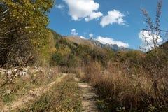 Cavi della strada non asfaltata nelle foreste e nelle montagne di Rila, Bulgaria fotografie stock