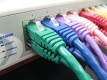 Cavi della toppa di Ethernet di Cat5e Cat6 Immagine Stock Libera da Diritti