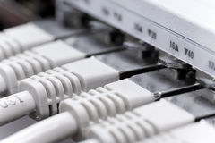 Cavi di lan connessi ad un interruttore Immagine Stock