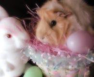 Cavia e coniglio nella regolazione di pasqua Immagine Stock