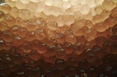Caviar background Stock Photography