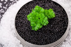 Caviar on ice Stock Photography