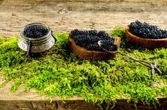 Caviar noir sur le pain foncé Images libres de droits