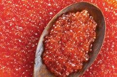 Caviar rojo en una cuchara de madera Fotos de archivo libres de regalías