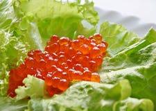 Caviar vermelho Imagens de Stock