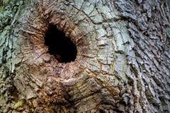 Cavidade de um tronco de árvore foto de stock