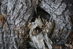 A cavidade de uma árvore velha imagem de stock