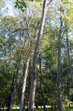 Cavidades na árvore imagens de stock