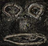 Cavidades na casca de uma árvore sob a forma de uma cara imagem de stock