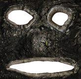 Cavidades na casca de uma árvore sob a forma de uma cara fotografia de stock royalty free
