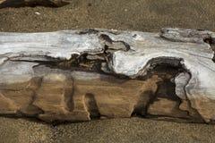 Cavidades no log da madeira lançada à costa no lago flagstaff no cano principal do noroeste imagens de stock