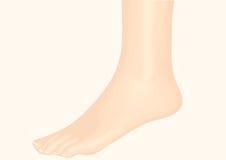 caviglia Fotografia Stock Libera da Diritti