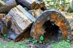 cavità Fotografia Stock Libera da Diritti