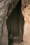 Cavità in albero Immagine Stock