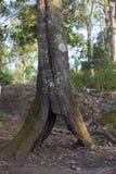 Cavità dell'albero Fotografia Stock