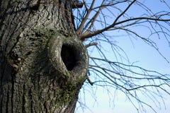 Cavité d'arbre Photos stock