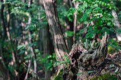Cavité d'un arbre Image libre de droits