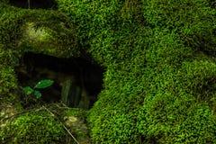 Cavità dell'albero Immagine Stock Libera da Diritti