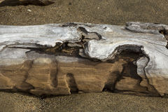 Cavities in driftwood log at Flagstaff Lake in northwestern Main. Cavities in driftwood on the sandy beach of Flagstaff Lake in northwestern Maine stock images