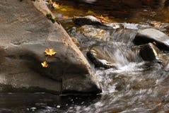 Cavitt Creek Royalty Free Stock Photos