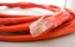 Cavo & spina di Ethernet Fotografie Stock Libere da Diritti