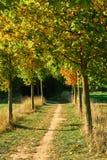 Cavo del passaggio pedonale dagli alberi in autunno fotografie stock