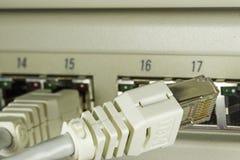 Cavo della rete - il collegamento è cercato fotografia stock