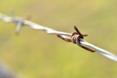 Cavo di Barb. Fotografia Stock Libera da Diritti